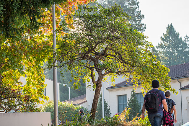 Trees on the HSU campus and students walking