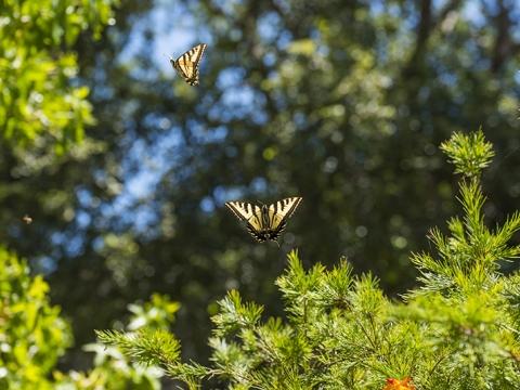 Butterflies flying in midair